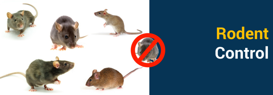 Rodent Control Services in ahmedabad