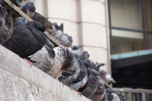 Bird Pest Control Services