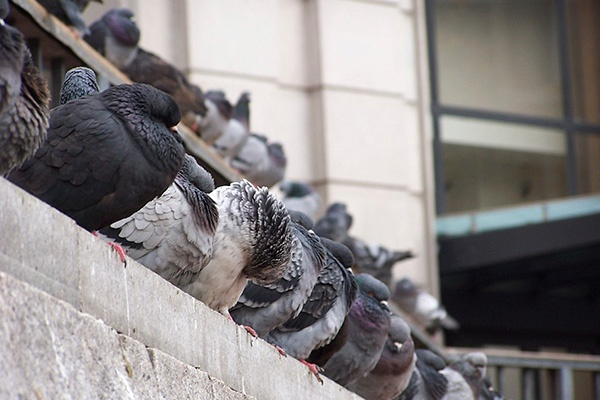 Bird Pest Control Services