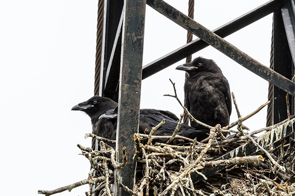 Birds Pest Control Service in Ahmedabad, Gujarat, India