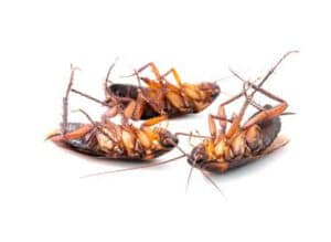 Buy Pest Control for Cockroaches Online India