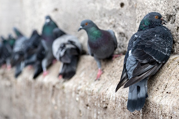 General Pest Control Management Services in Ahmedabad, Gujarat, India