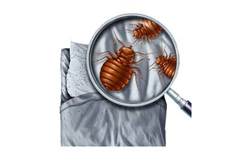 Pest control services in Kharghar