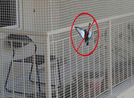 Pigeon netting for Balcony