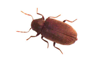 Wood Borer Control Services in Ahmedabad, Gujarat, India